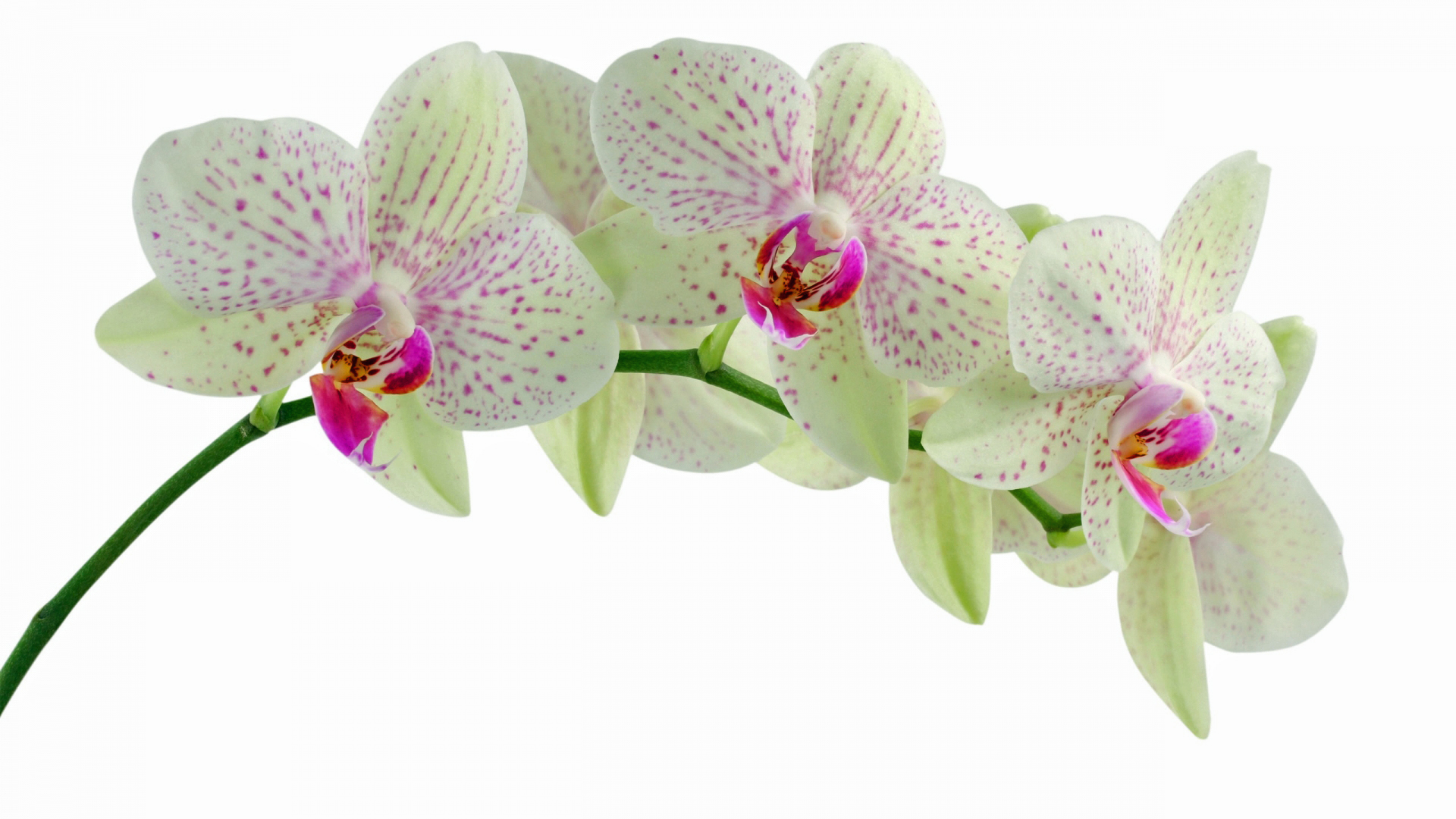 orchids essay Essay nearly half a  presumably of masochistic tendency, has an orgasm in the moment of being knifed), and  orchids is aimed at the power-instinct,.