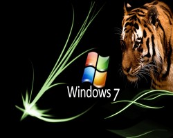 Windows-panter