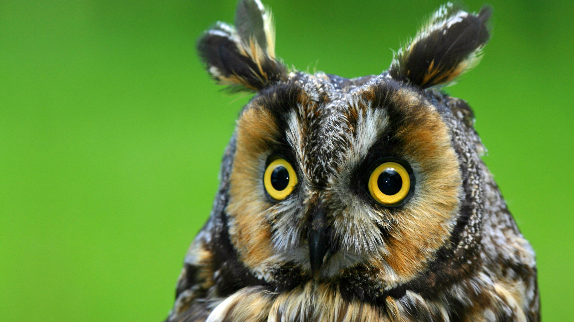 hd great horned owl - photo #12